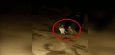 Aç kalan yavru ayı çöp konteynerini götürdü