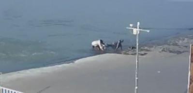 Ailece denize düştüler