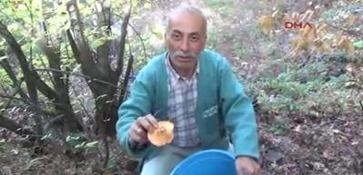Çanakkale'de mantar bereketi