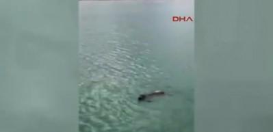 Denizdeki köpeği kurtarıp veterinere götürdüler