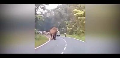 Fil, çekim yapan adamı böyle öldürdü!