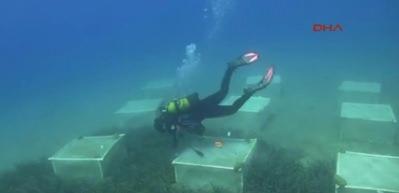 Foça'nın deniz çayırları gözlem altında
