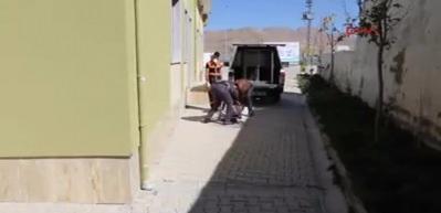 İşkence gören yavru köpeğe, Van Büyükşehir Belediyesi sahip çıktı