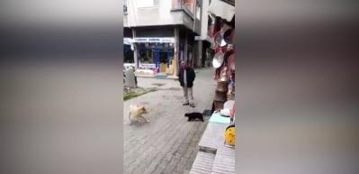 Köpek, Trabzonlu kediye atar yapınca...