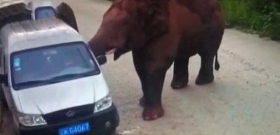 Öfkeli fil araçlara böyle saldırdı!