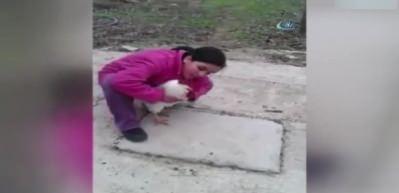 Ölü taklidi yapan horoz küçük kızı korkuttu