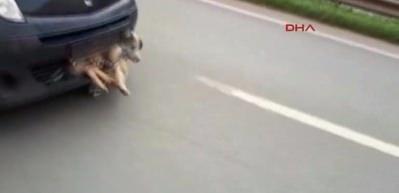 Pendik'te akıl almaz görüntü! Çarptığı köpek...