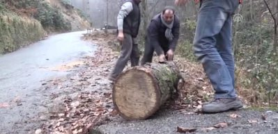 Rizeli Rambo çeyrek tonluk kütüğü sırtında taşıdı!