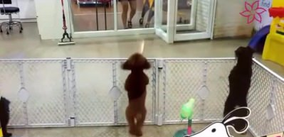 Sahibini gören köpeğin yaptıkları sosyal medyayı salladı