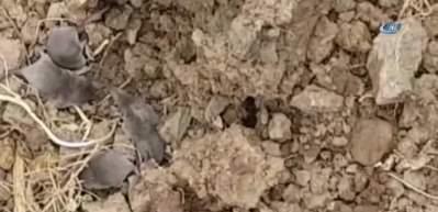 Sivas'ta görülmüştü! Ne olduğu ortaya çıktı