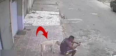 Sokak köpeği adamı dumura uğrattı