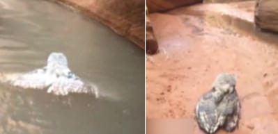 Suyun içerisinde gördü kameraya çekti