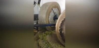 Taş baskı zeytinyağı böyle yapılıyor