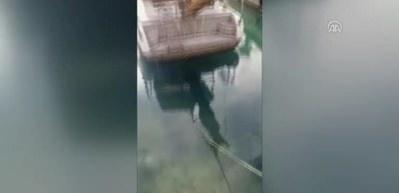 """Teknecilerin """"Akdeniz foku"""" heyecanı kamerada"""