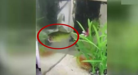 Zombi balık görenleri şok etti