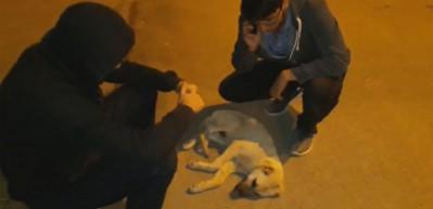 Yaralanan sokak köpeğinin başından saatlerce ayrılmadılar