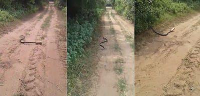Yılanın başına gelene bak!