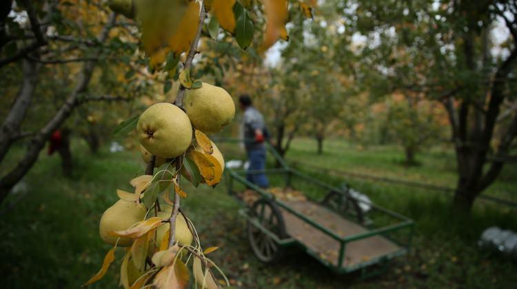 Suriyeli çocuklar tadını bilmedikleri meyveler yiyebilecek