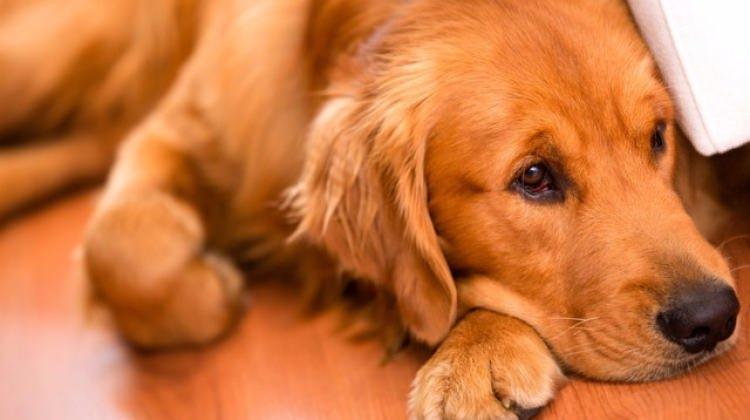 Dikkat! Köpeğiniz kanser olabilir