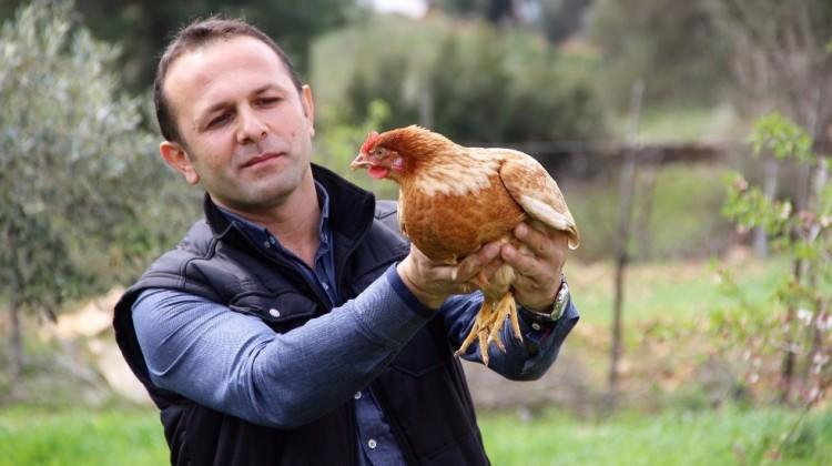 1 horoz, 2 tavuk hayatını değiştirdi