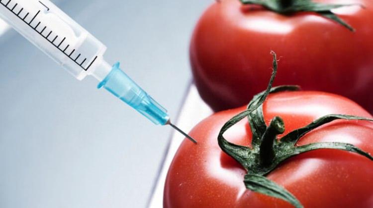 GDO'lu meyve sebze nasıl anlaşılır?