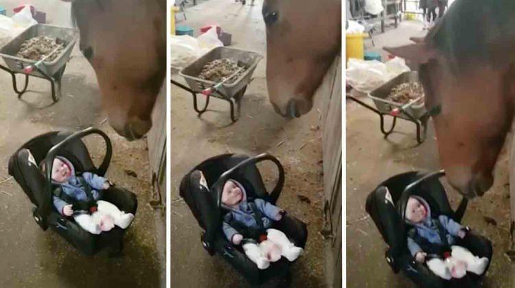 Ağlayan bebeği eğlendiren at görenleri şaşırtıyor
