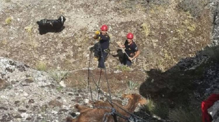 İtfaiyeden 'keçi kurtarma' operasyonu