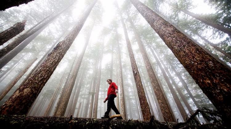 'Orman banyosu' hayat kurtarıyor!