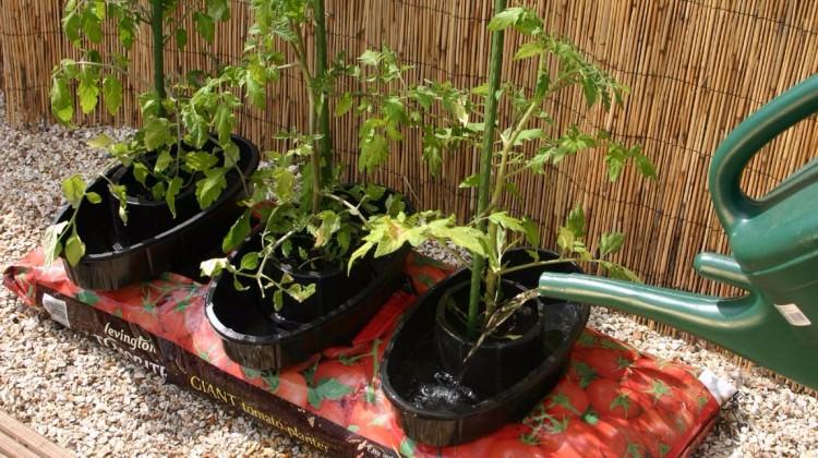 Balkonda meyve, sebze yetiştirmenin püf noktaları