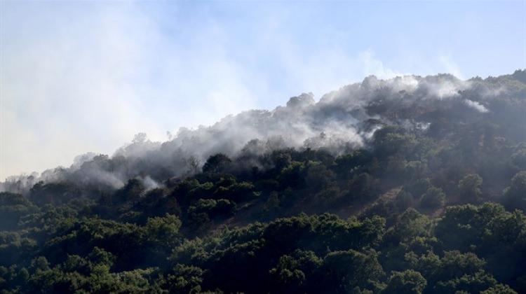 Erzincan'daki orman yangını