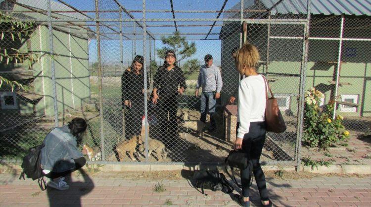 Sandıklı MYO öğrencilerinden hayvan barınağına ziyaret