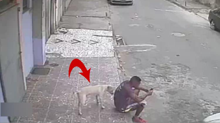 Köpek adamın arkasına usulca yaklaştı ve...