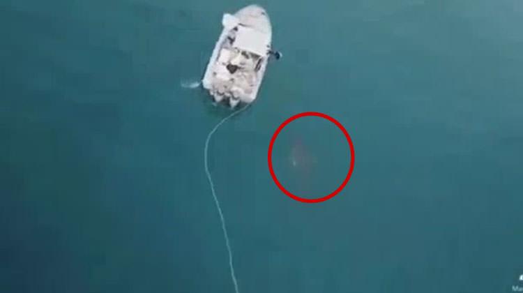 Tekneyi batırmak için saldıran köpekbalığı
