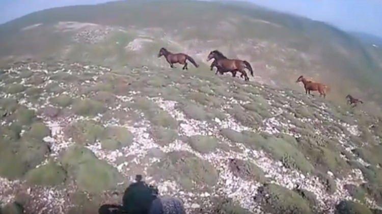 Motokrosçu yılkı atlarıyla böyle yarıştı...