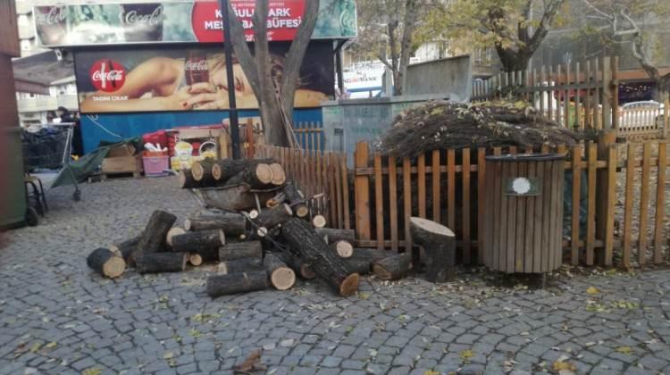 CHP'li belediyeden ağaç katliamı