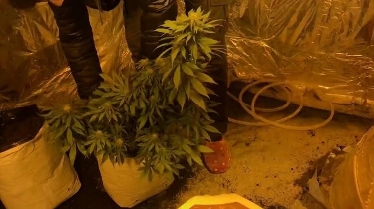 Uyuşturucu yetiştirmek için evine sera kurdu