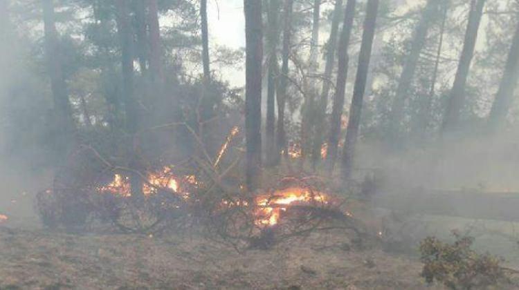 Mersin'de çalılık yangını