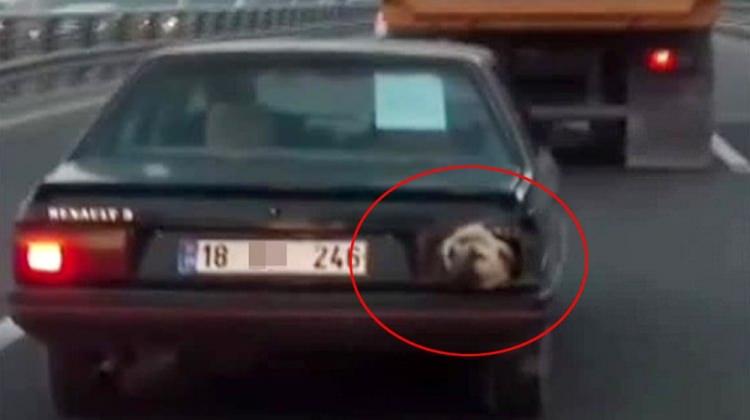 Stop lambası yerine köpek kafası!