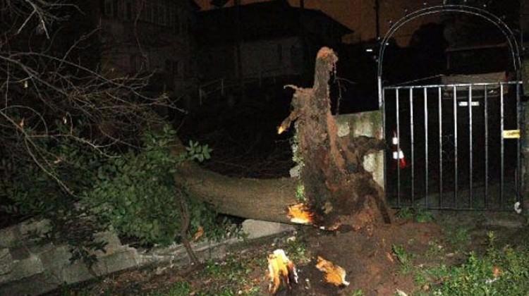 Devrilen ağaç mahalleyi elektriksiz bıraktı