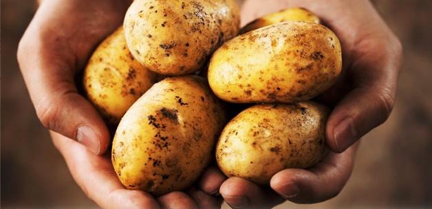 Patates fiyatları düşüyor!
