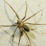 Örümcek zehri şifa oldu