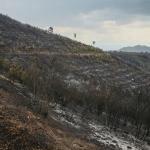Bayındır'daki orman yangını kontrol altına alındı