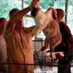 Açlıkla boğuşan ülkeden çağrı: Tavşanları yiyin