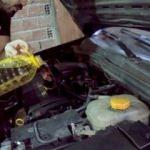 Motora ayçiçek yağı koyup çalıştırınca...