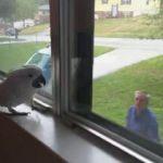 Sahibini gören papağanın muhteşem sevinci