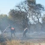Didim'de arazi yangını