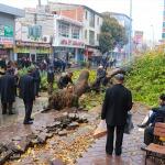 Devrilen 120 yıllık çınar ağacı paniğe neden oldu