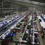 Tekstil fabrikası, Gölköy'de yeni geçim kapısı oldu