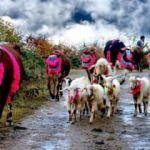 Doğu Karadeniz'de 'yayla göçü' sona erdi