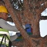 Edremit'te ağaçlara kuş yuvası asıldı